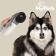 my-pet-vacuum-pet-hair-vacuum