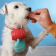 bolsitas-higienicas-perro-03