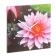 reloj-pared-flores-05