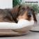 ogrevana-postelja-za-ljubljencke-innovagoods-18w%20(1)