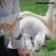 krtaca-in-masazna-rokavica-innovagoods%20(2)